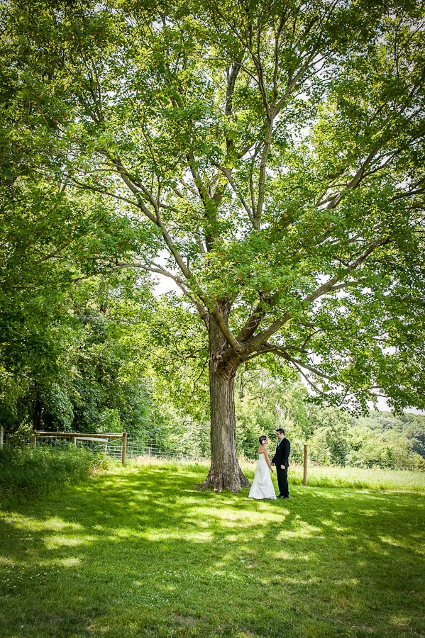 Couple stands underneath a giant tree on their wedding day