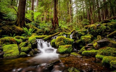 Olympic National Park / Landscape Photography