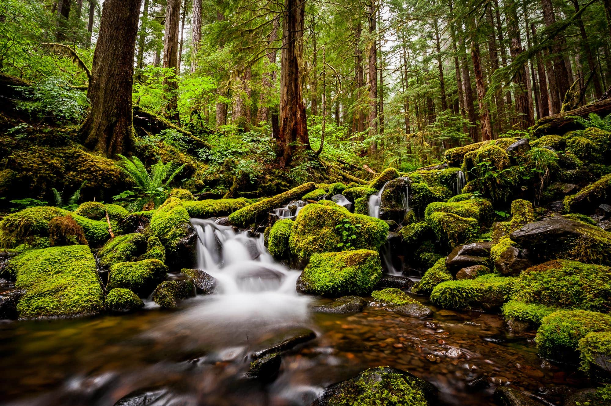 A pool forms at the bottom of a small waterfall in the Sol Duc Falls area of Olympic National Park that shows the incredible green color of the forest, the moss, and the massive old growth forest that surrounds it. Long exposure photo with milky smooth water