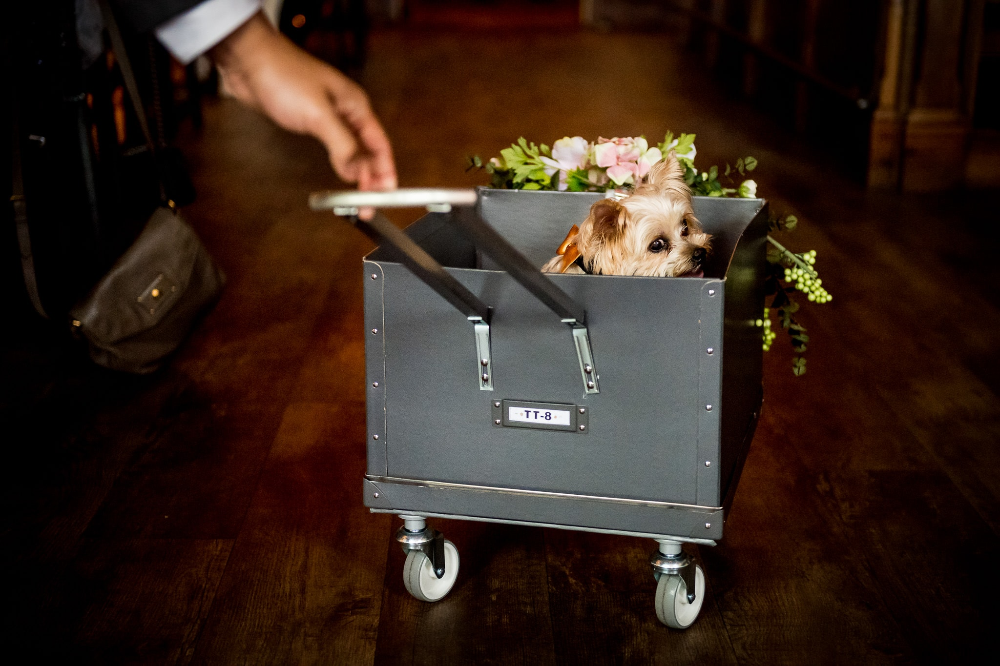 Aster Cafe Wedding Photo with pet dog