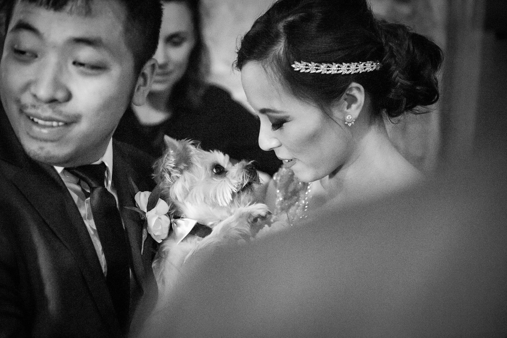 Bride shares special moment with her Yorkie after the ceremony at Aster Cafe