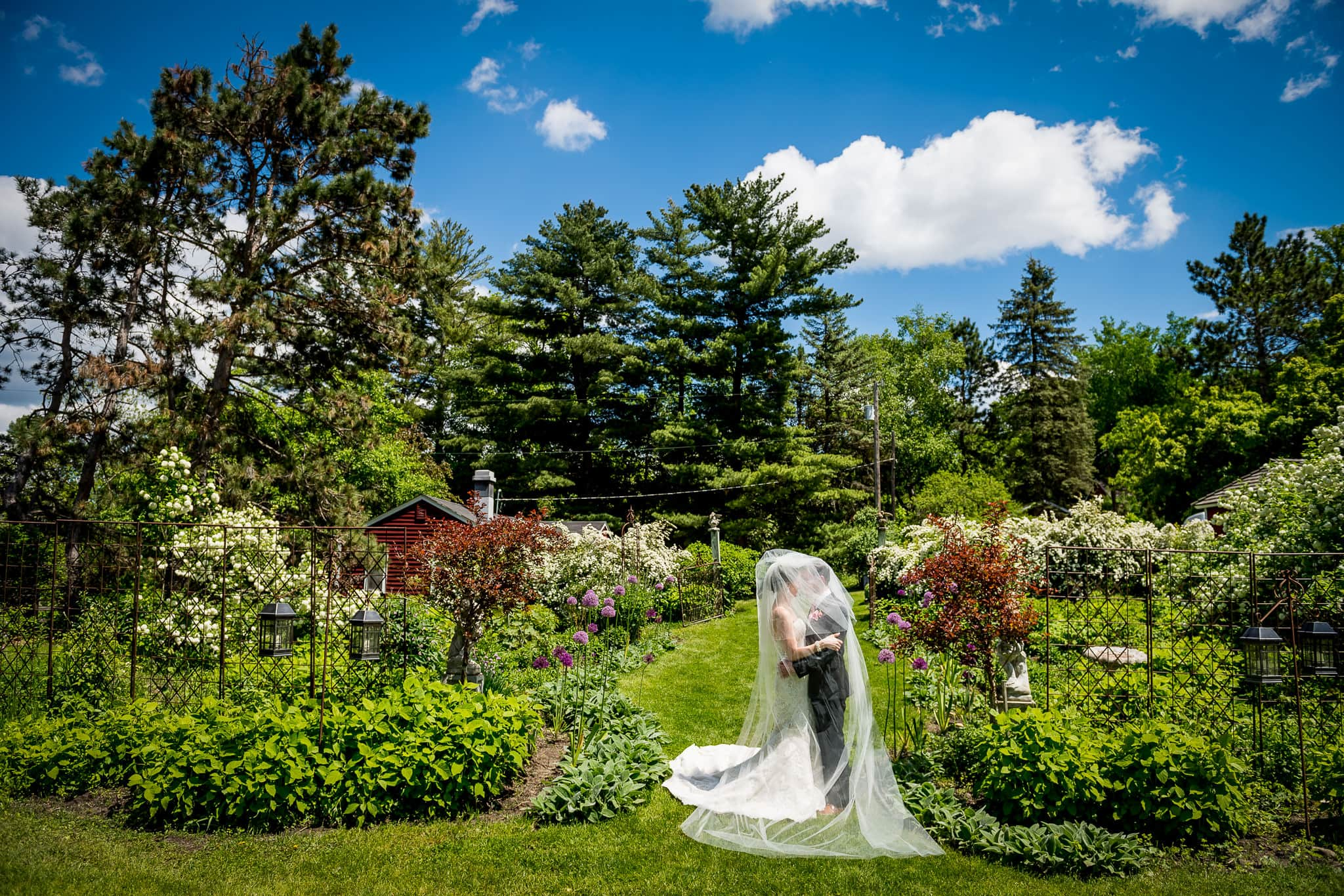 Bride and Groom underneath the veil in the main flower garden at Camrose Hill Flower Farm