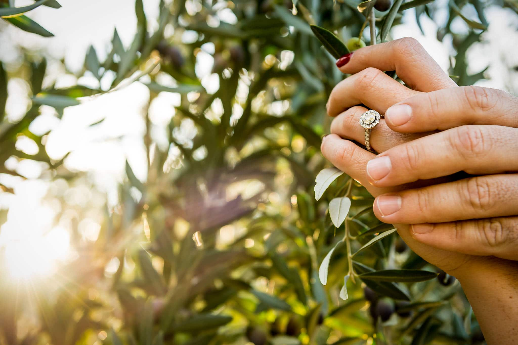 Close up of a woman's engagement ring amongst olive trees in Napa Valley near Artesa Winery