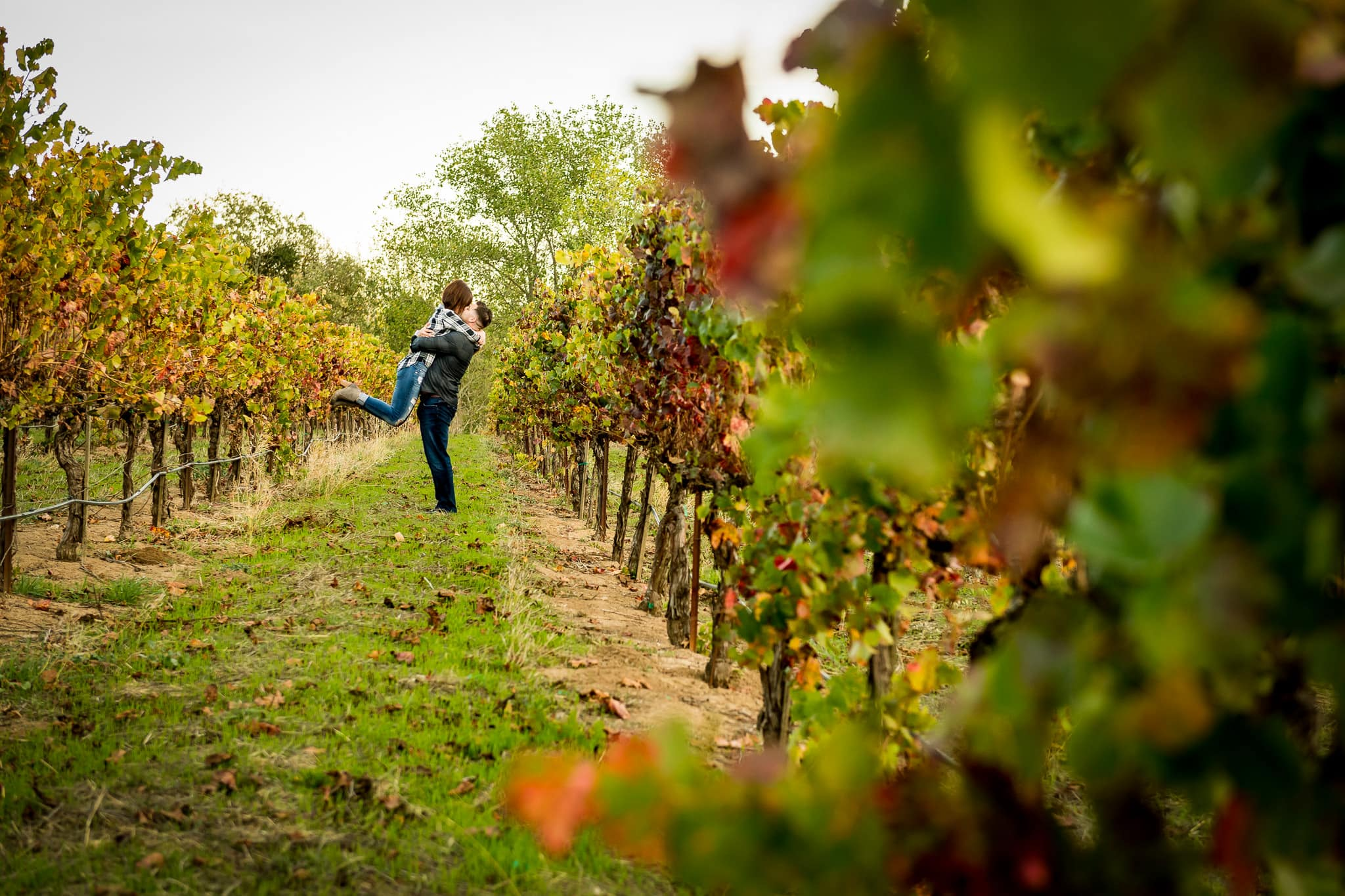 An engaged couple shares a passionate kiss in between colorful rows of grapes at Artesa Winery's Vineyard in Napa Valley