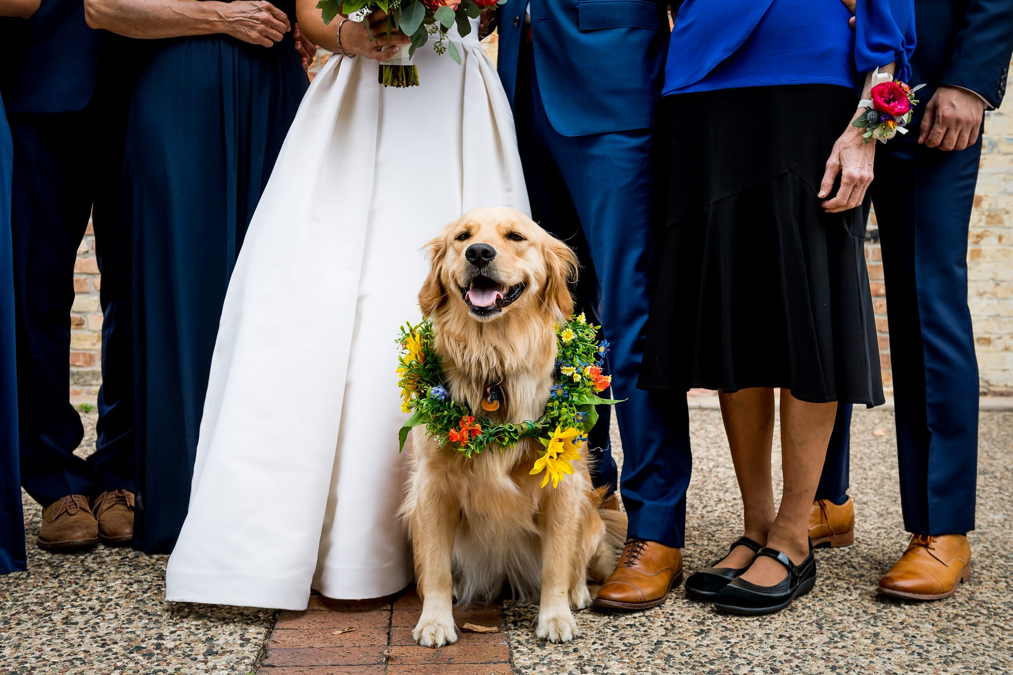 Ring bearer golden retriever poses for a photo while wearing his wedding flowers