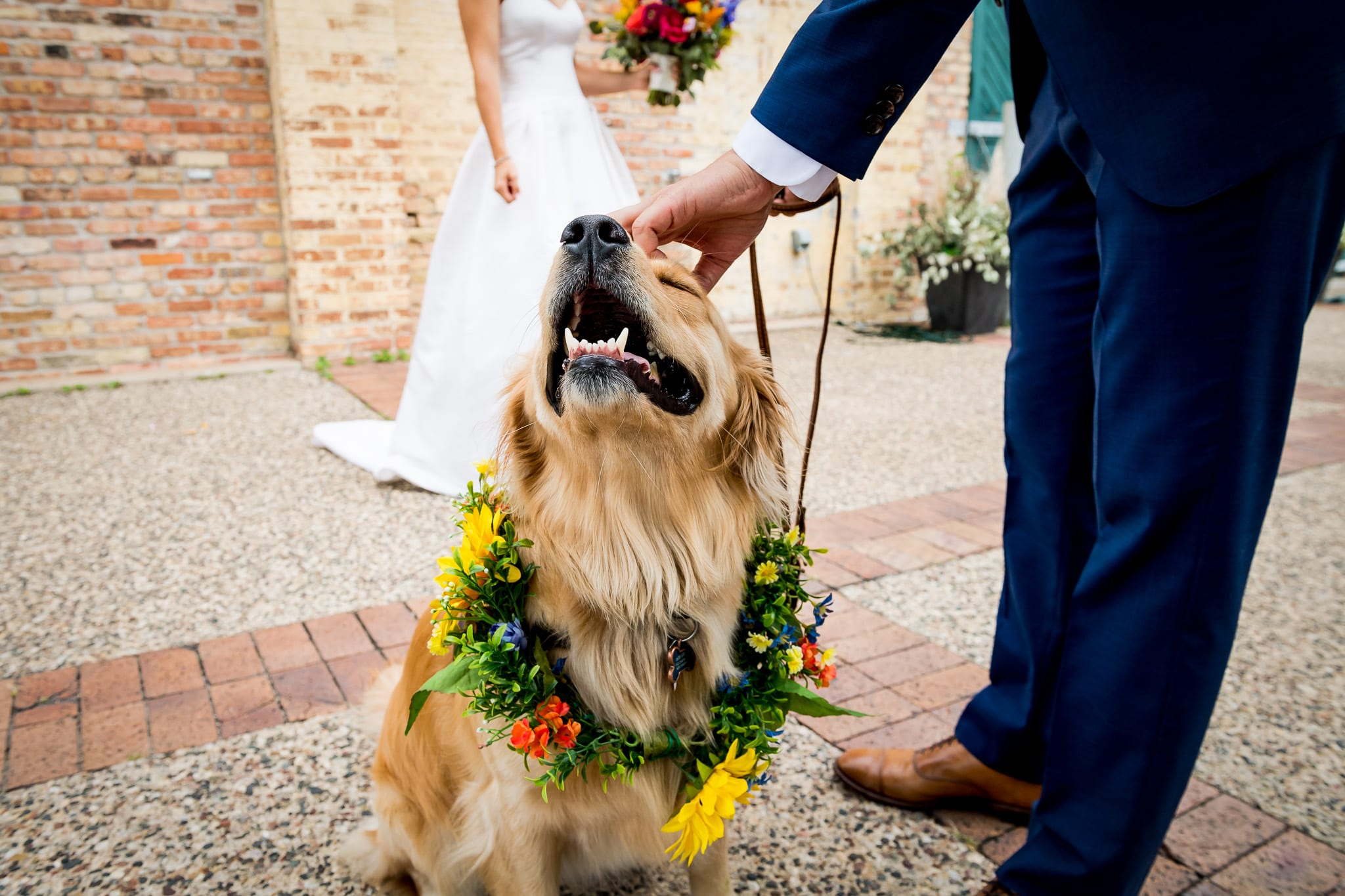 Golden retriever ring bearer enjoys being pet by his dad the groom