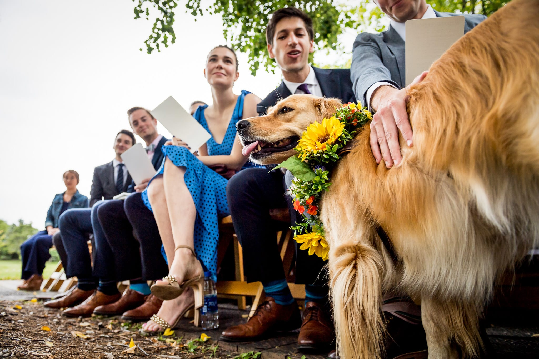 Golden Retriever as a ring bearer in a wedding at the Nicollet Island Pavilion, while adorned in flowers from Haute House Studio